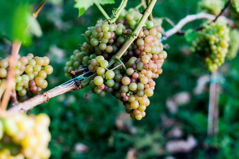 Abbotsford Single Tree Winery-42.jpg
