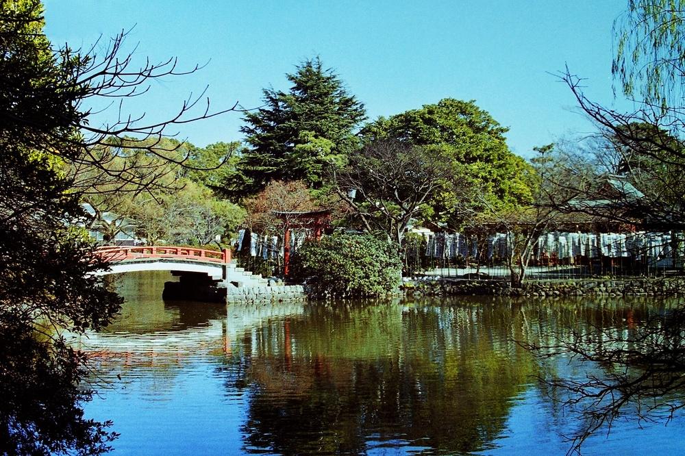 Tsurugaoka Hachiman-gū, Kamakura, Japan