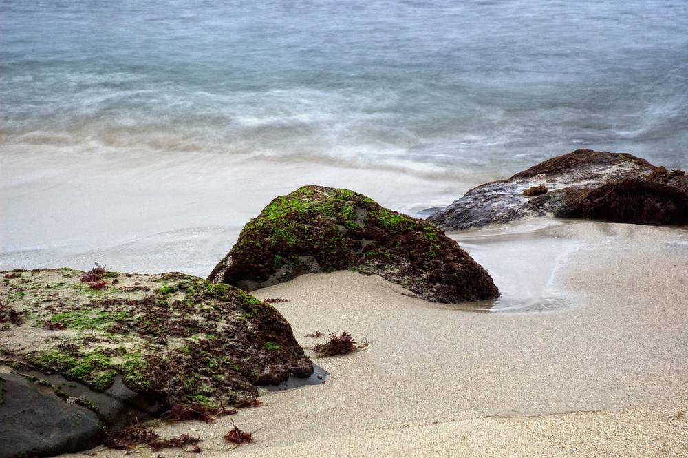 Mossy Rocks, La Jolla Cove