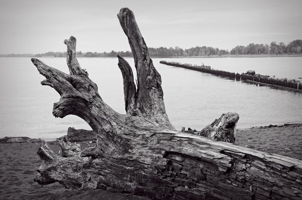 Old Tree on Kelley Point