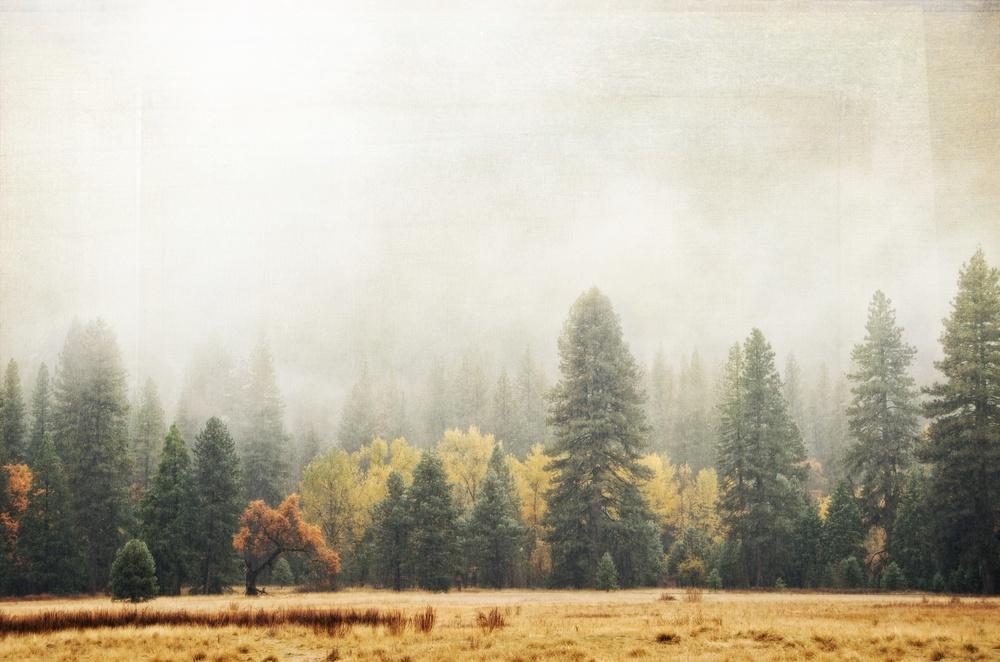 Rain In Yosemite