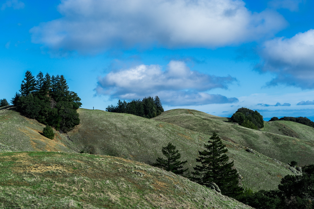 Rolling Hills of Bolinas Ridge