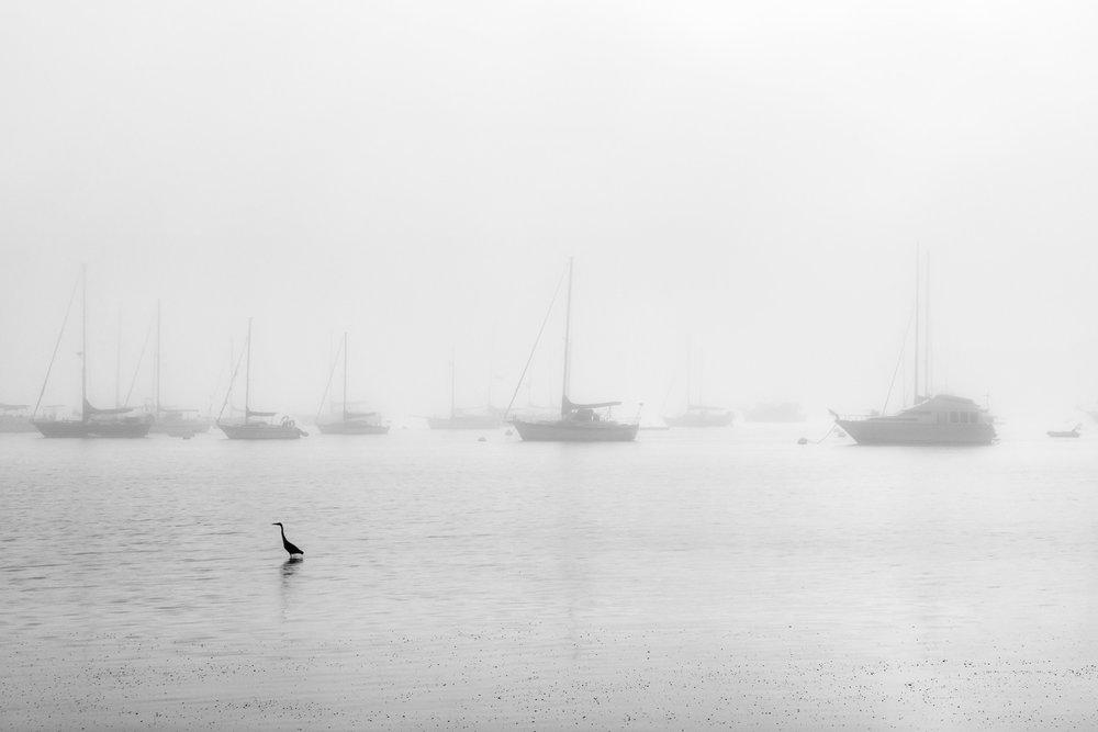 Massive Fog