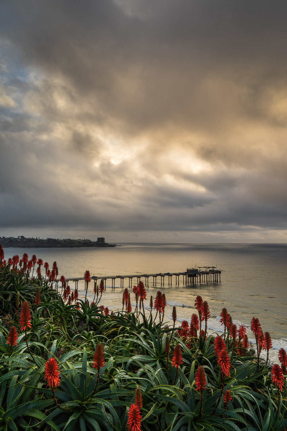 Flowers Above The Pier