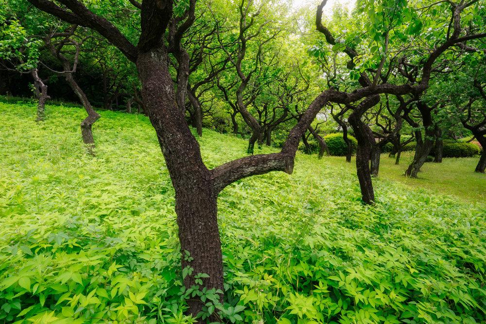 Trees In Shinjuku
