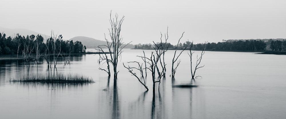 Barren Trees In Otay Lakes