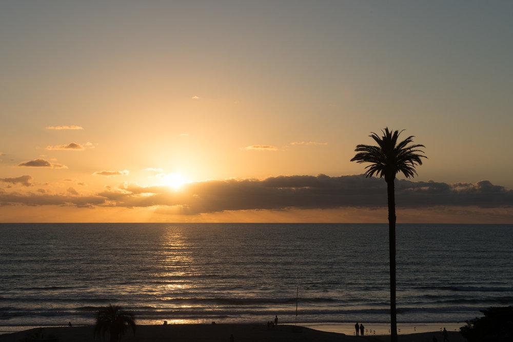 Palm At Moonlight Beach Original