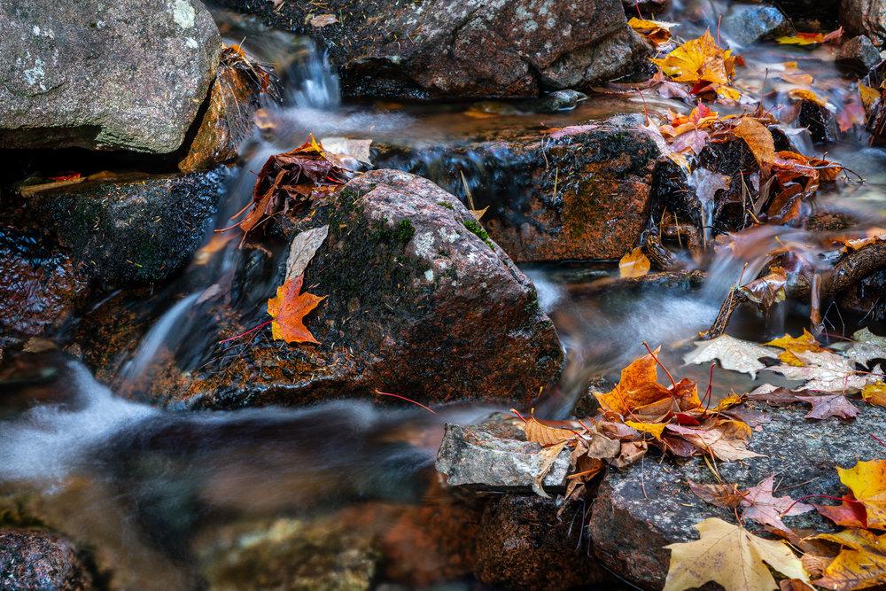 Brook details, Acadia National Park