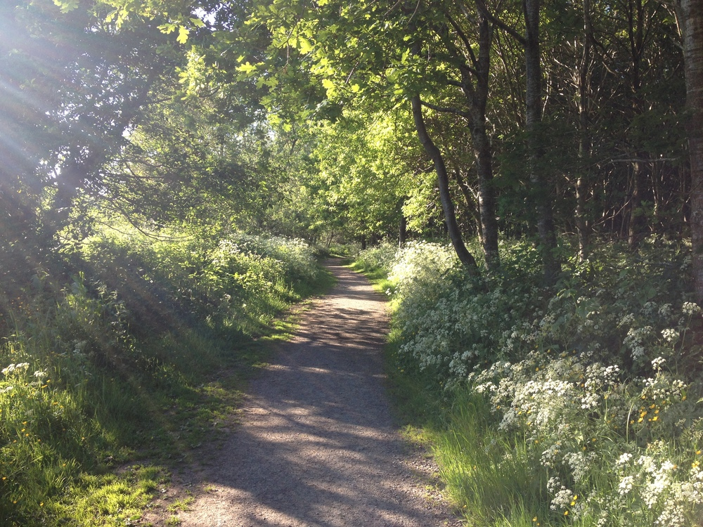 Belvoir Forest Trail 1
