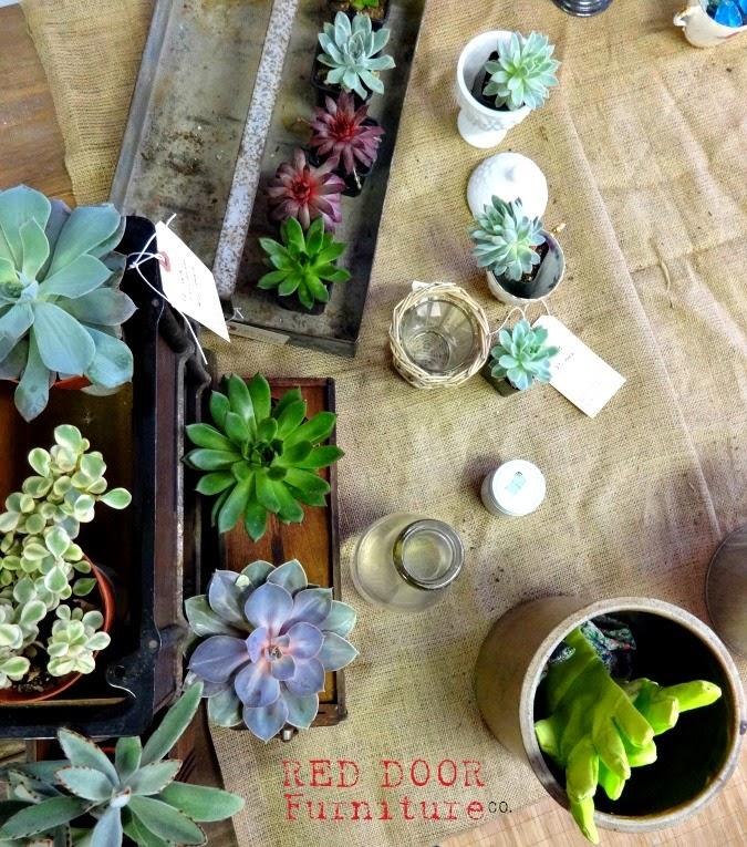 SucculentBar7RDFCo.jpg