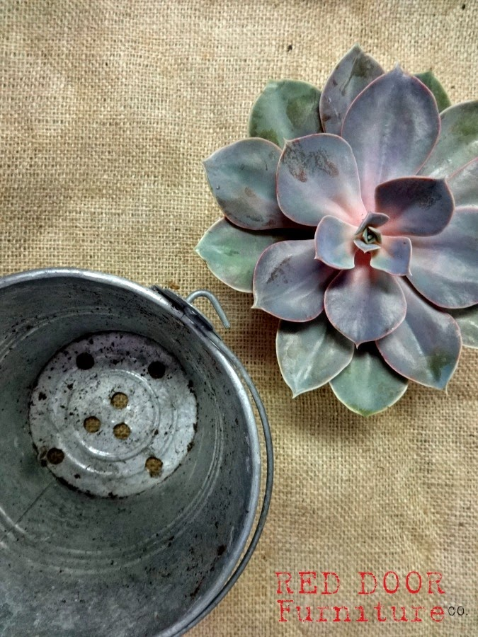 SucculentBar4RDFCo.jpg