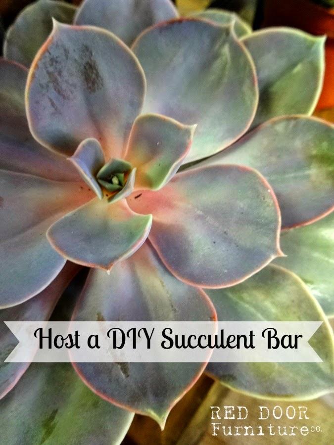 DIY+Succulent+Bar.jpg
