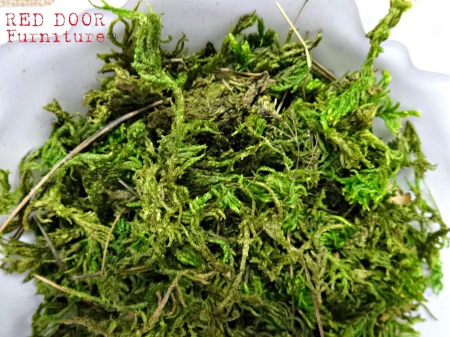 SucculentBar5RDFCo.jpg