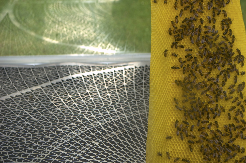 Detail of the final installation with a metal grill to hide and  collect dying bees (in this time of the year, it is expected that natural death occurs in hundreds up to a thousand each day in a healthy hive).