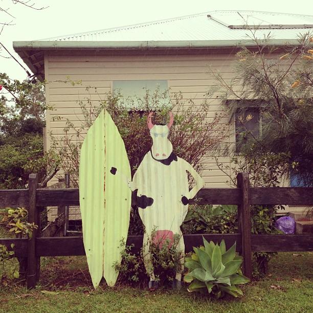 Cowabunga  (at Byron Shire, Oz)