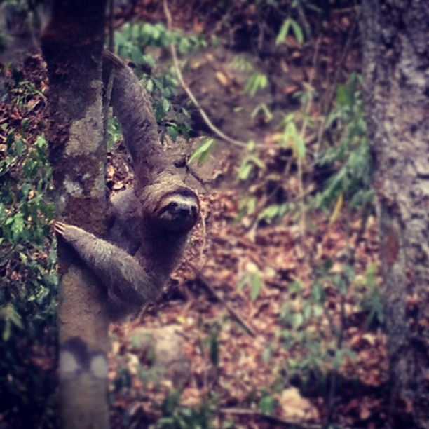Sloth! From the deck (Taken with  instagram )