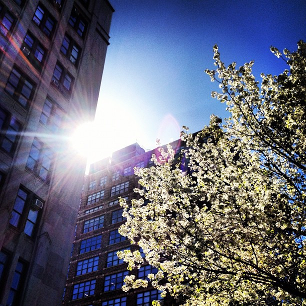 Spring sprung (Taken with  instagram )
