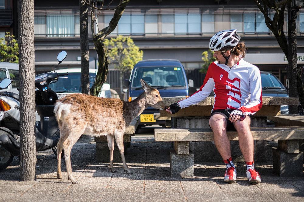 Sio e Zuppos, il cervo.