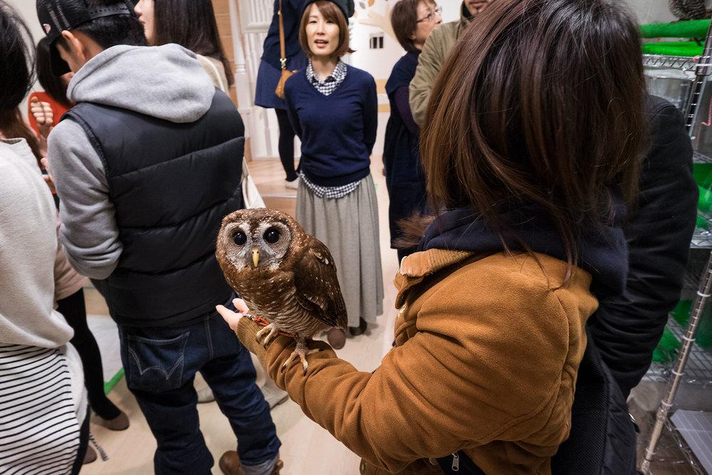 More owls.