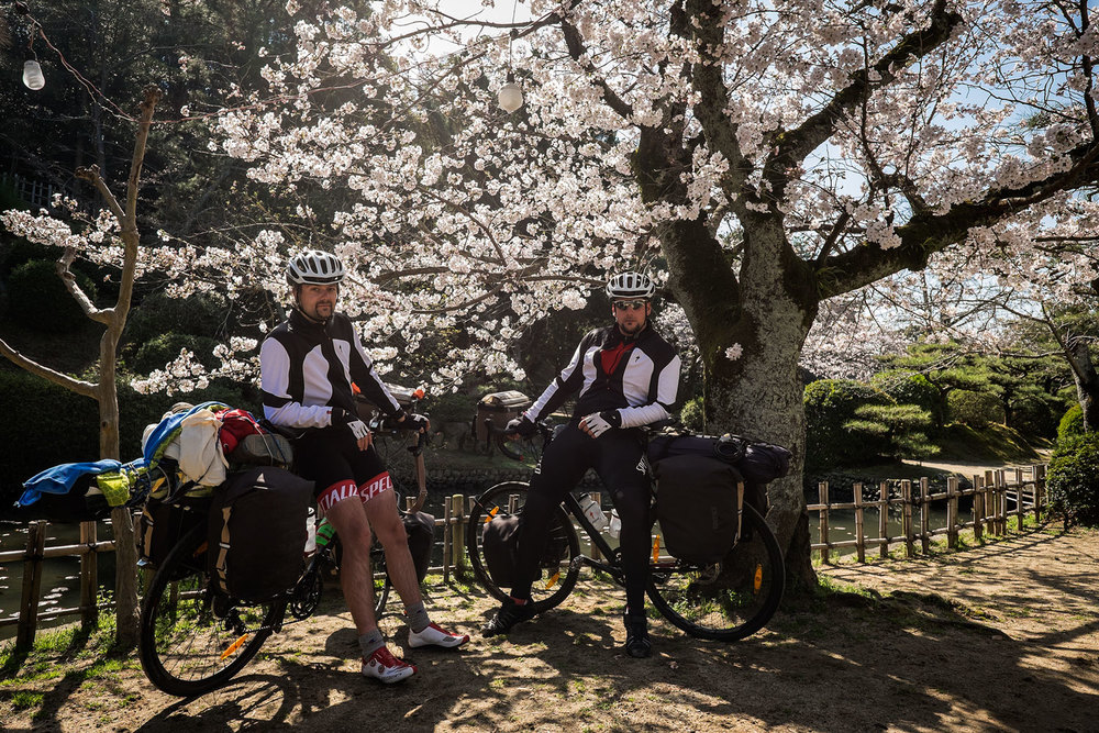 Cherry blossoms and the world's two laziest cyclists.