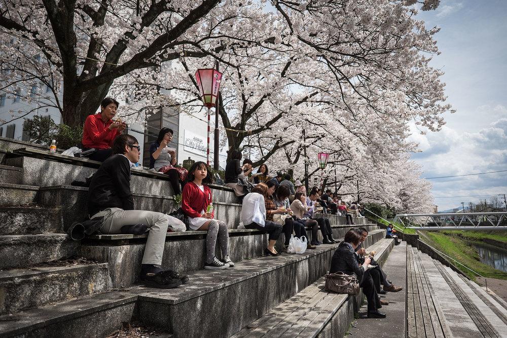 In questa stagione, I ciliegi in fiore diventano lo scenario perfetto per un pranzo all'aperto.