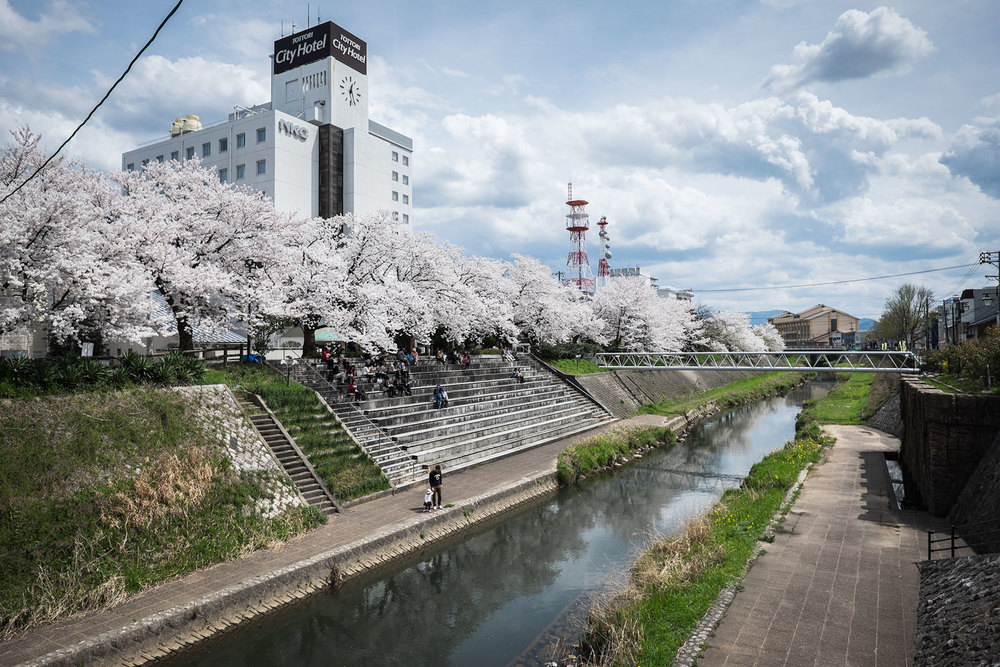 A view of the Tottori river with the sakura in full blossom