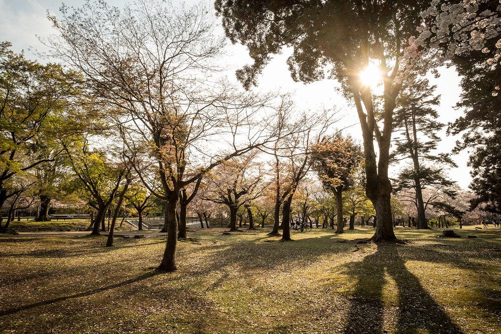 Il parco di Nara