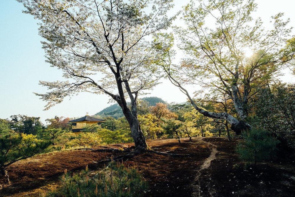 Uno degli scorci del parco che circonda il Kinkakuji