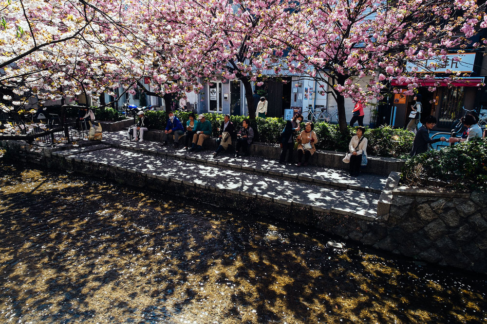 People resting under the cherry blossoms, near the river.