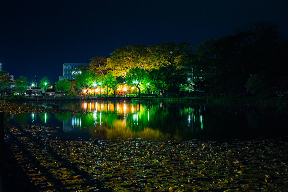 Akita's central park by night.