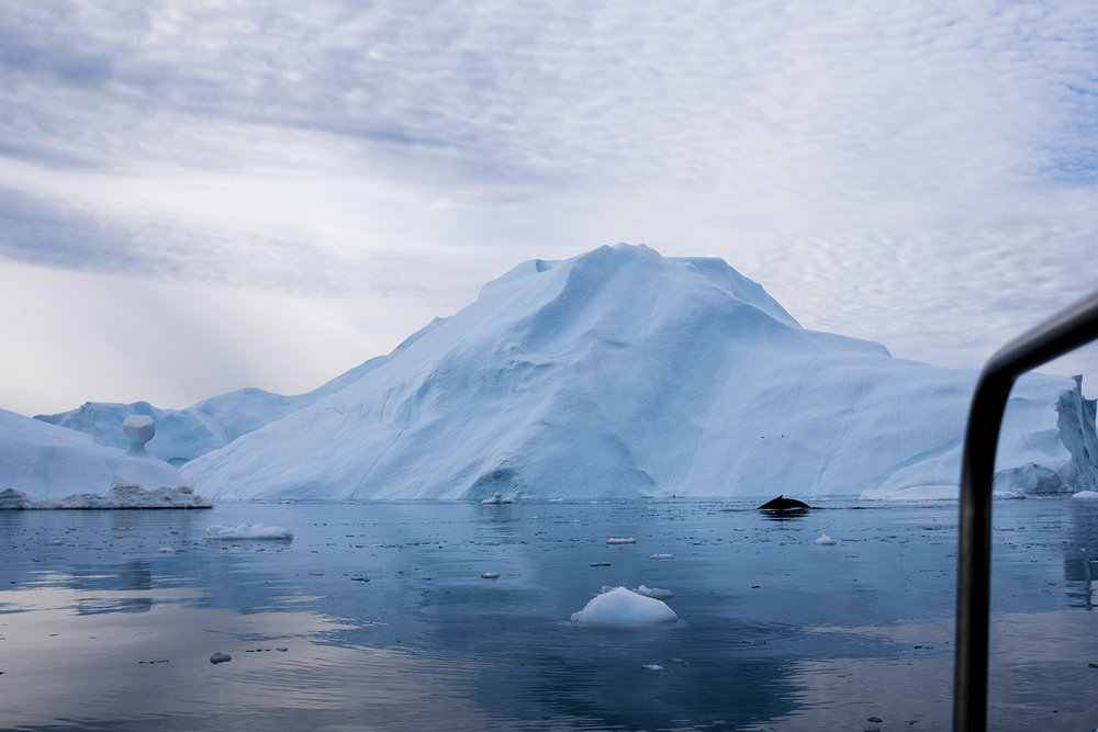 Ilulissat_dayone_Selection_-54.jpg