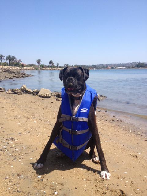 SUP_Pups_San_Diego_Dog_Paddleboarding.jpg