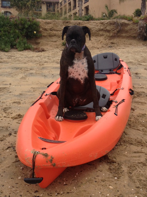 SUP_Pups_San_Diego_Dog_Paddleboarding_2.jpg