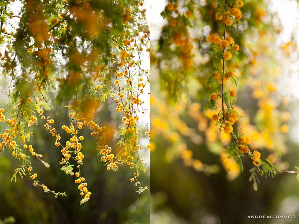 orange puffs 3