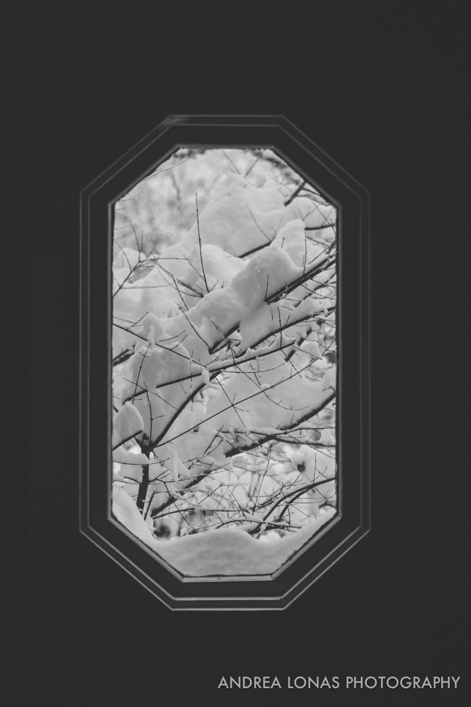 2017 Snowmageddon-Andrea Lonas Photography-8118.jpg