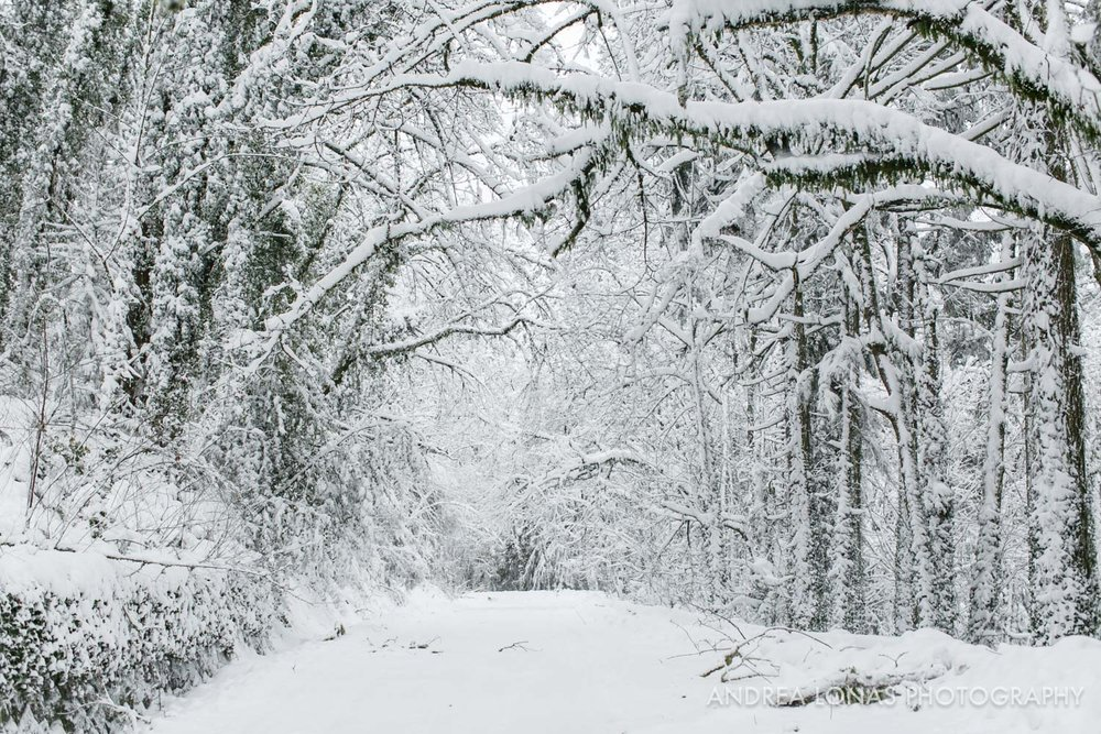 2017 Snowmageddon-Andrea Lonas Photography-8186.jpg