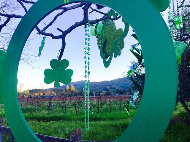 Happy St Patrick's Day from Napa Valley! #stpatricksday #march17 #lucky #napavalley #green #clover