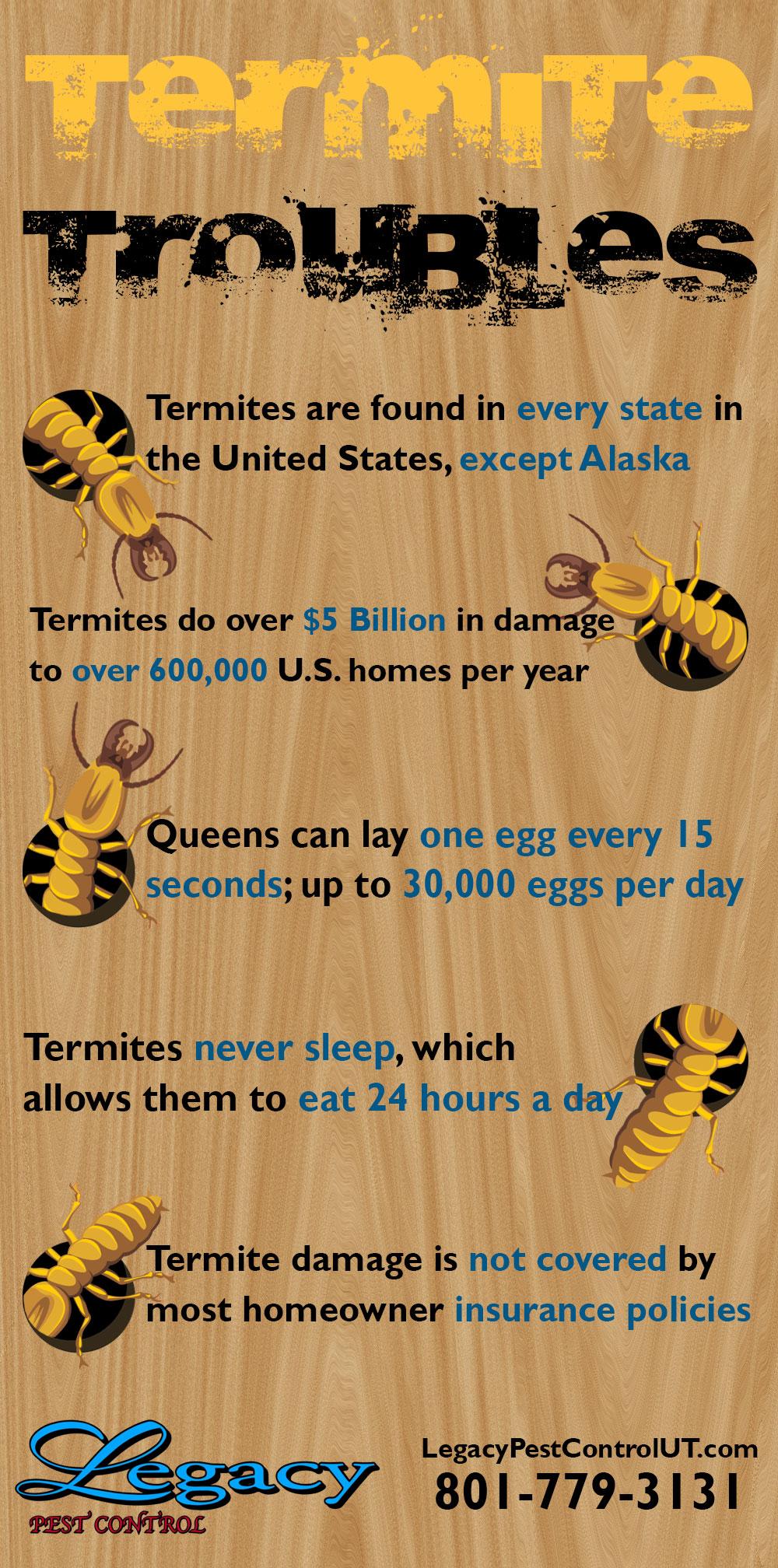 Termite-Infographic.jpg