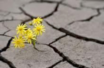 Flower-in-concrete.jpg