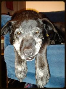 Old Sophie.jpg