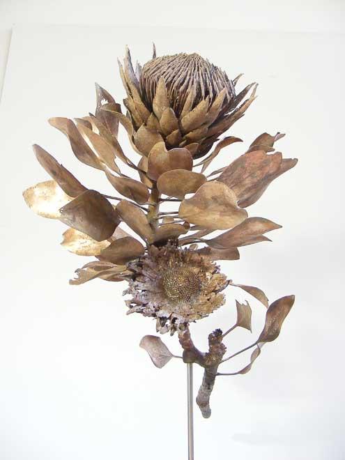Nic Bladen-Protea cynaroides (bronze).jpg