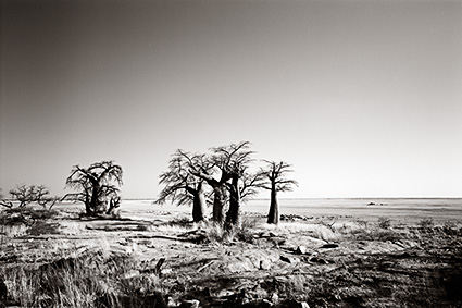 Kubu Islan-Botswana (SA-31).jpg