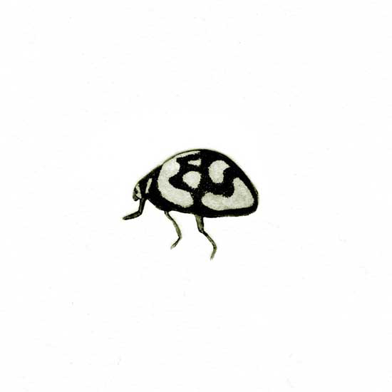 Jane Eppel Insect-X-Etching, 150x150.jpg