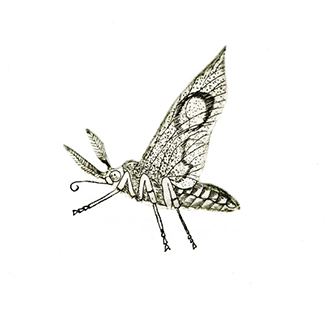 Jane-Eppel,-Insect,-Etching,-150x150.jpg