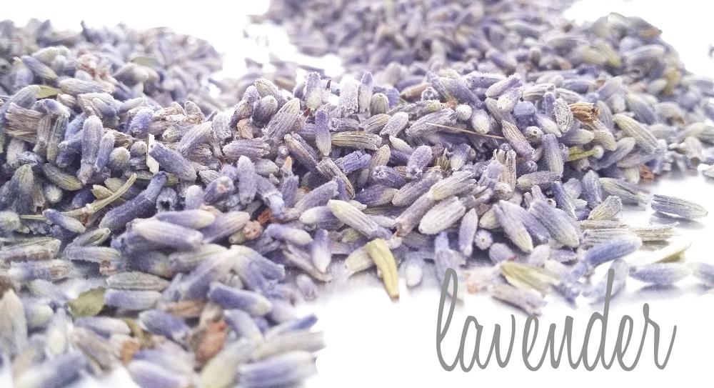 lavender-display.jpg