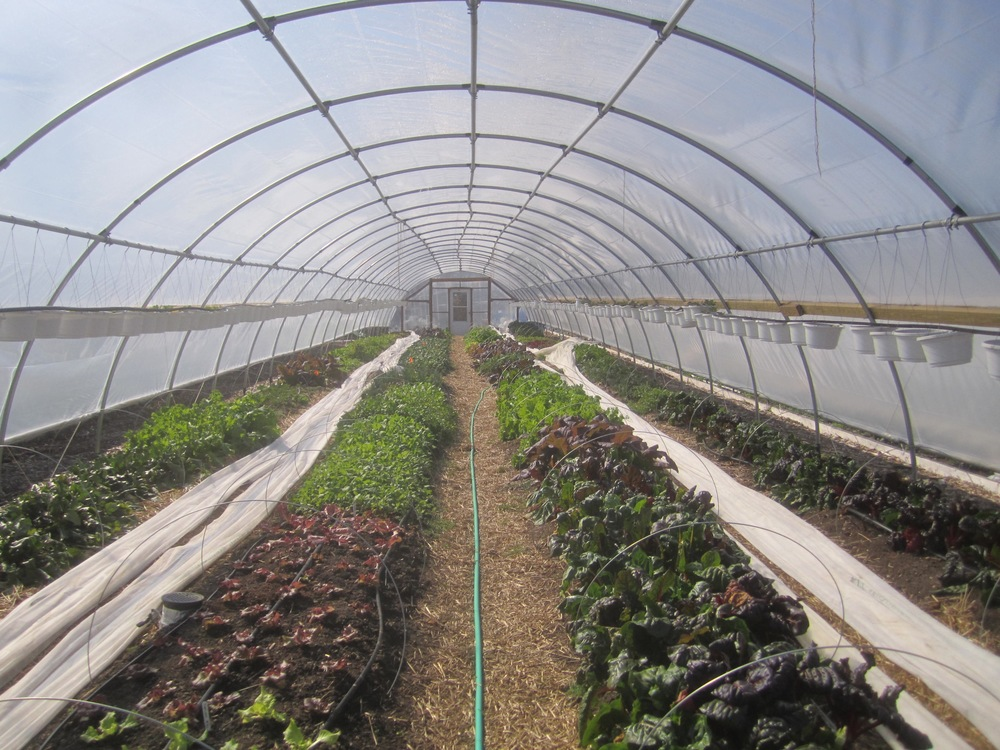 we are an authorized sales for nolts greenhouse kits - Commercial Greenhouse Kits