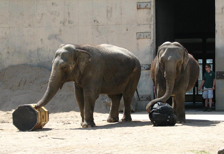 African Elephant Toys For Boys : Kids toys waldorf elephant little elephant stuffed animal