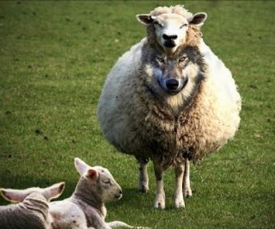 Wolf-In-Sheeps-Clothing.jpg