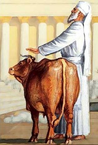offerings_bull.jpg