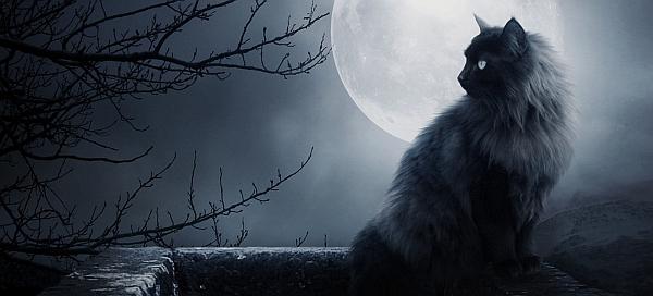 The History Of Halloween Black Cats Desire M Mondesir